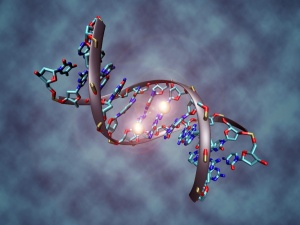 CRISPR, also known as the DNA editor, attracts the attention of many researchers, including Skoltech's Konstantin Severinov. Image courtesy of Wikipedia, under Creative COmmons license