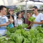 rooftop lettuce