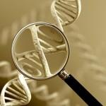 shutterstock_130308086_genome_500x375