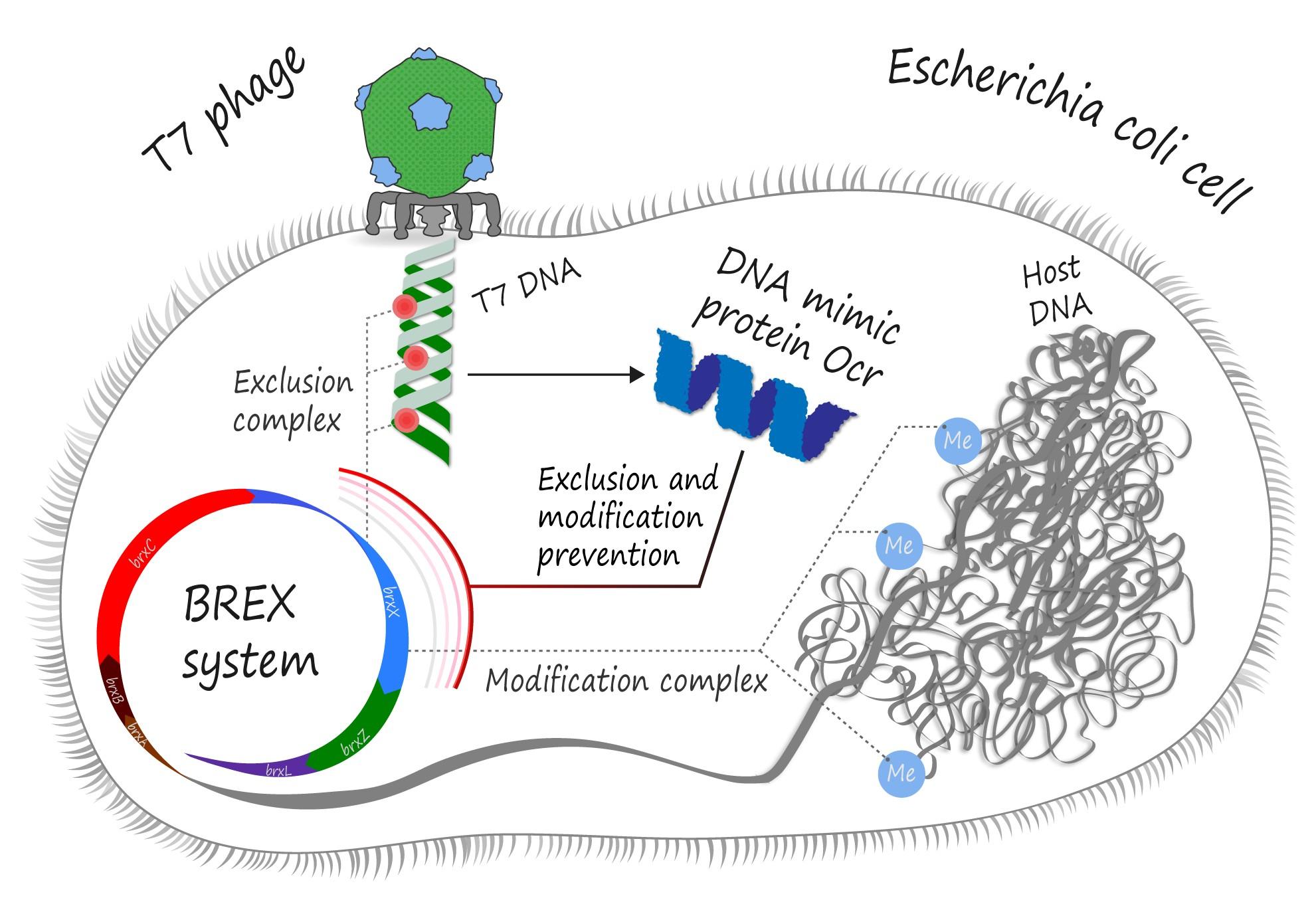 ocr-protein-vs-brex-system-4