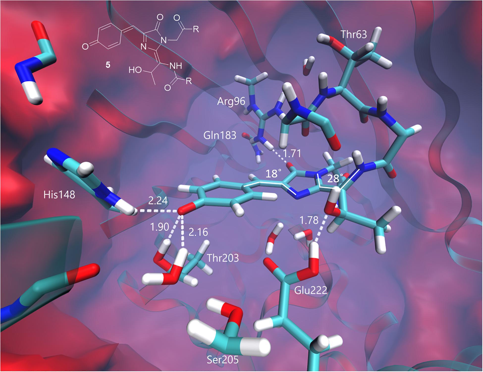 Модель промежуточного состояния хромофора и его взаимодействия с белковым окружением в ходе анаэробной фотоконверсии GFP. Источник: Frontiers in Molecular Biosciences